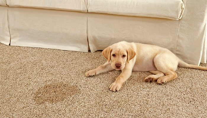 Prevent Water Damage To Your Carpet